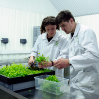 A man and a woman wearing white lab coats handling green vegetation